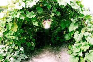 Garden's tale